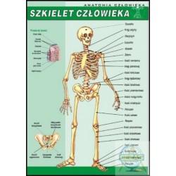 Plansza Szkielet człowieka/V