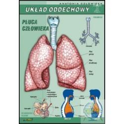 Plansza Układ oddechowy/V